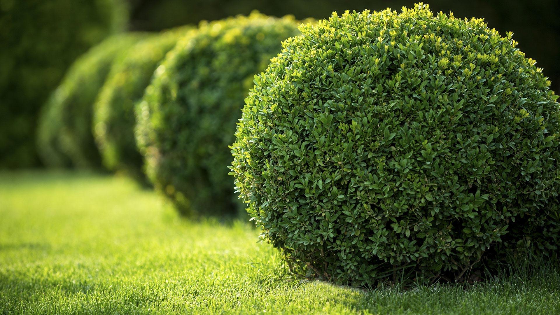 Sibrian Landscaping Commercial Property Maintenance, Commercial Landscaping and Commercial Garden Design slide 1